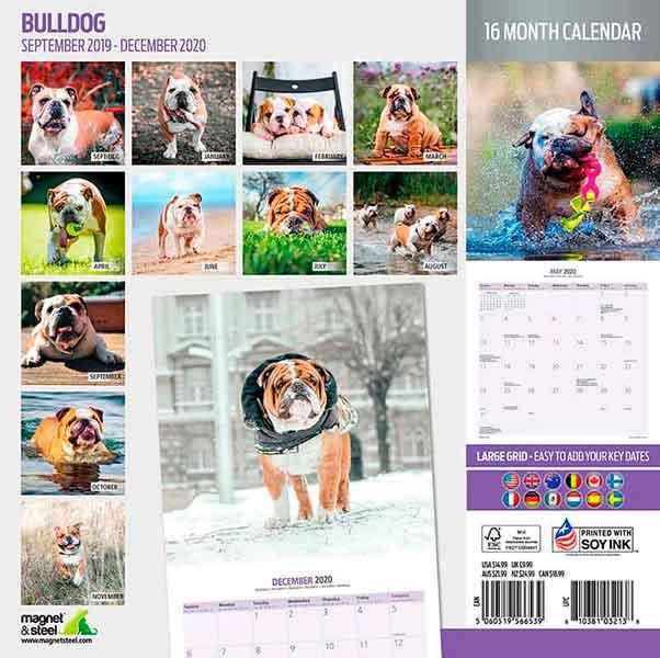 calendario-bulldog.jpg