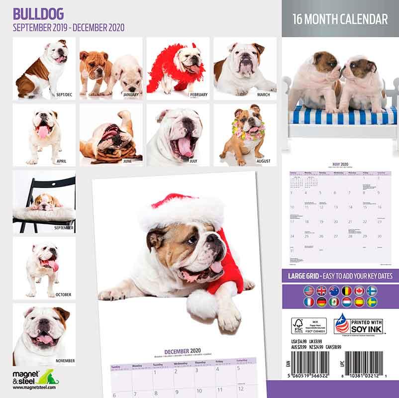 Calendario Bulldog 2020