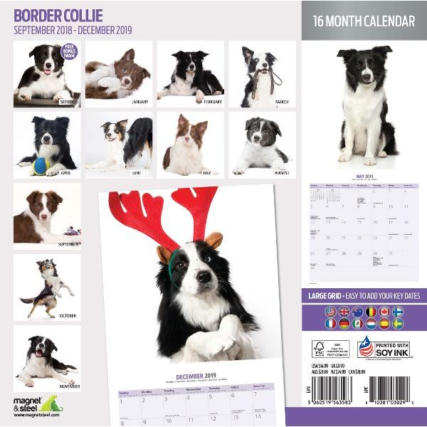 Calendario Border Collie 2019