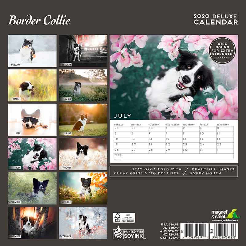 Calendario Deluxe Border Collie 2020