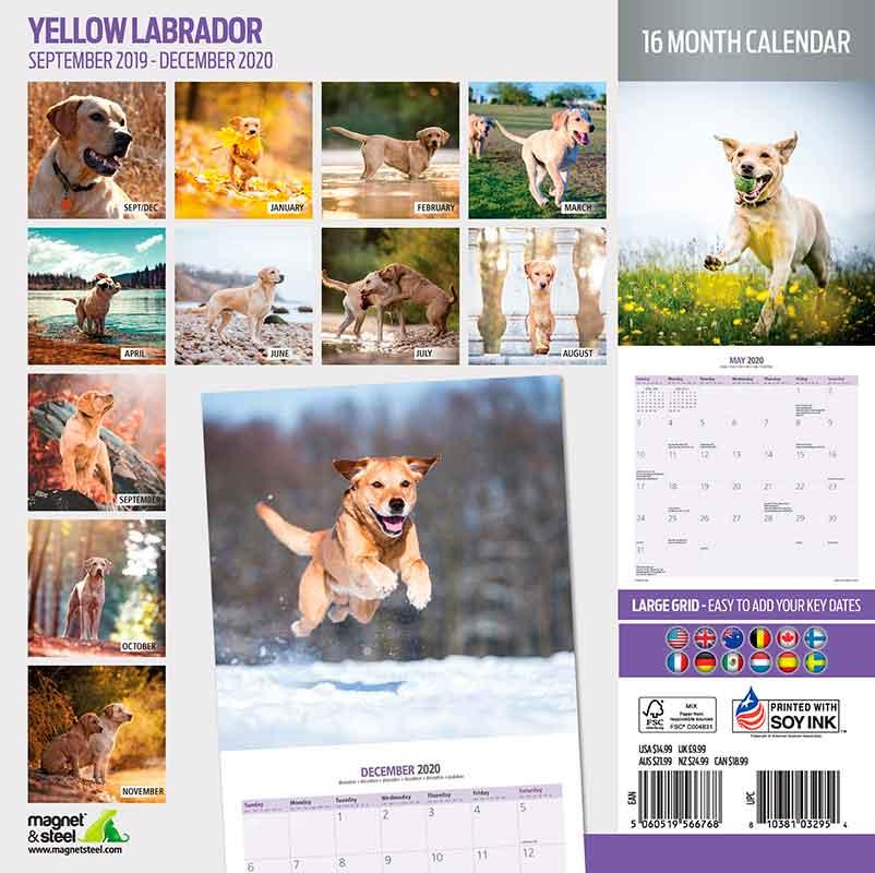 Calendario Labrador 2020