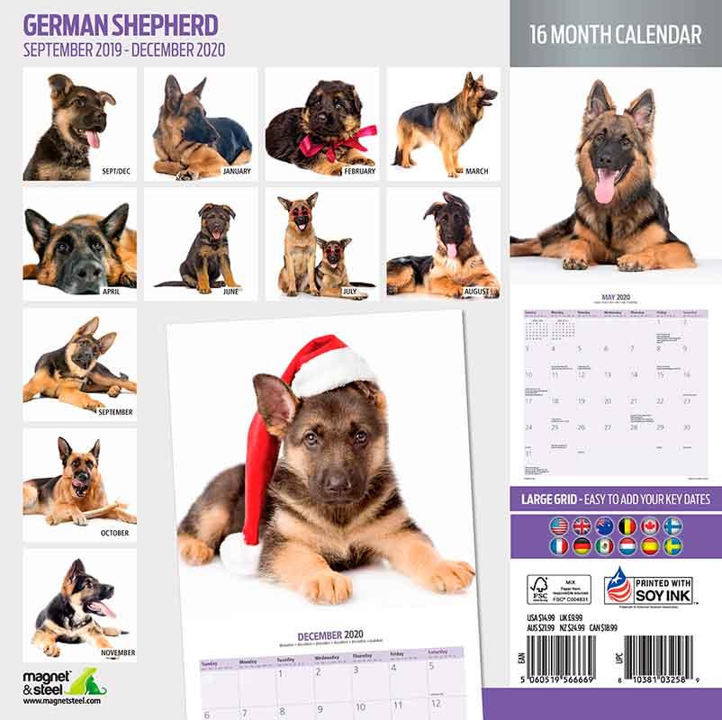 calendario-pastor-aleman-cachorro.jpg