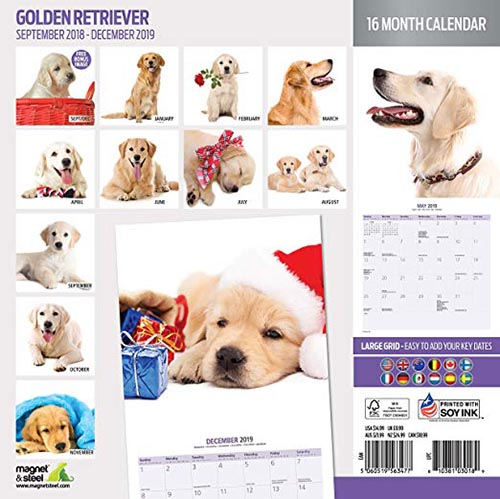Calendario Golden Retriever 2019 Magnet&Steel