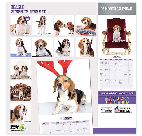 Calendario Perruno.Calendario Beagle 2019