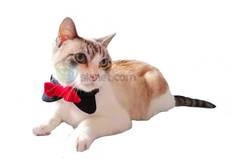 Pajarita Elegante de Fiesta para Perros y Gatos