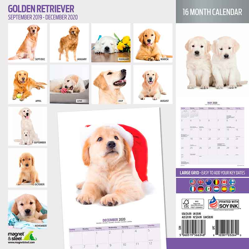 Calendario Golden Retriever 2020 Magnet&Steel