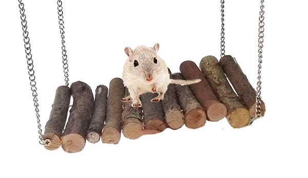 hamster en puente colgante.jpg
