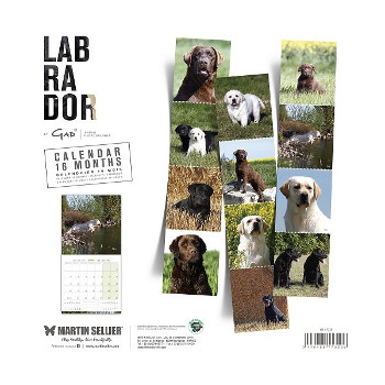 Calendario Labrador Retriever  2018