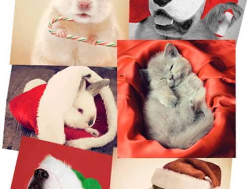 tarjeta-felicitacion-navideña.jpg